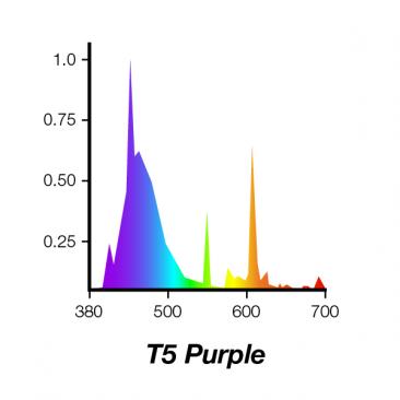 T5-Purple